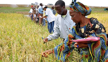 Foreign investors see potential in African agriculture « Afronline